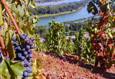 Cote Rotie is one of the greatest appellations in rhone valley, taste it on vinatis