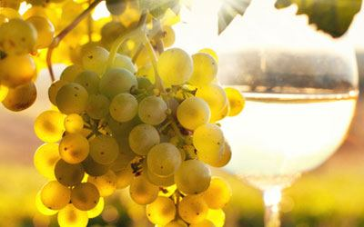 White wine grape - Chardonnay